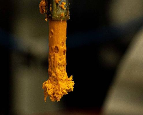 During the MRX C02 cannabis extraction process, the MRX pumps out C02 crude budder